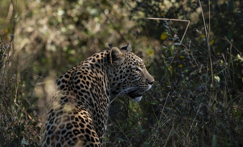 Book a 7-day luxury African safari with BPI Visa Signature for US$5,248