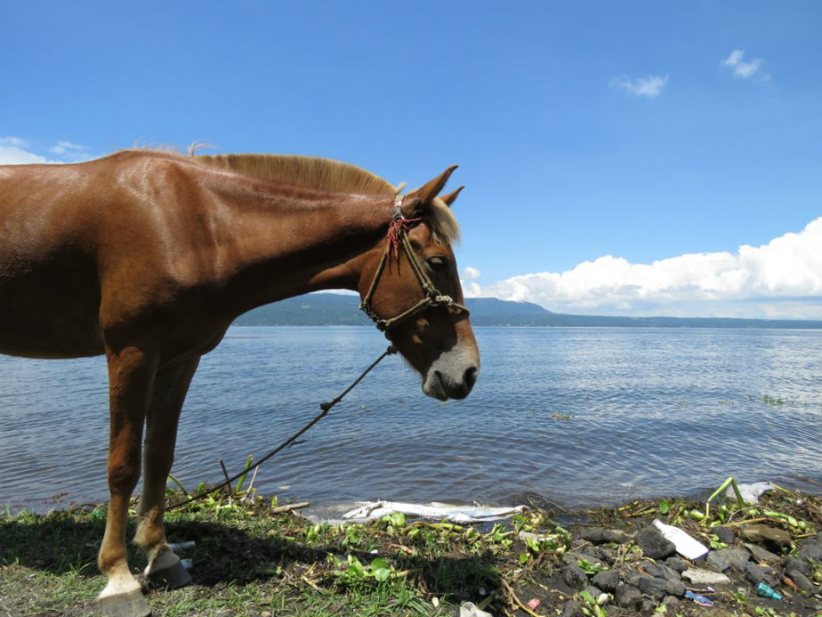 PETA: Animal care tips in light of Taal Volcano eruption